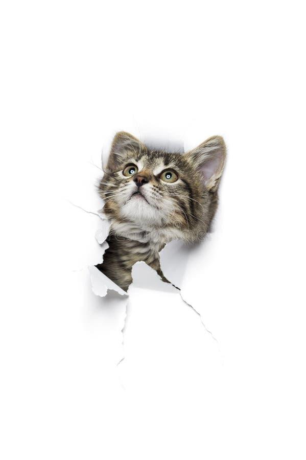 Katze im Loch des Papiers lizenzfreies stockbild