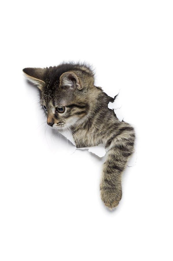 Katze im Loch des Papiers stockfotos