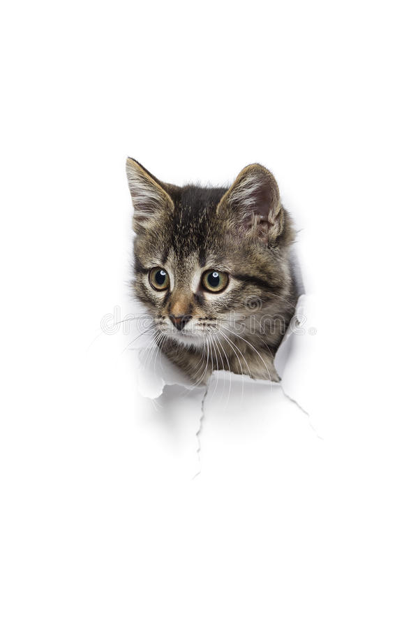 Katze im Loch des Papiers stockfoto