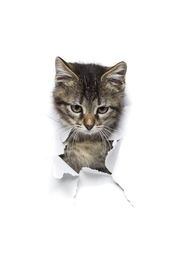 Katze im Loch des Papiers lizenzfreies stockfoto