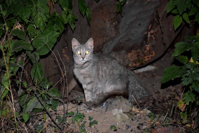 Download Katze im Park stockbild. Bild von greifer, schwarzes - 96935869