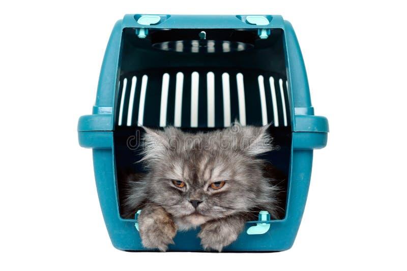 Katze im Rahmenträger lizenzfreie stockbilder