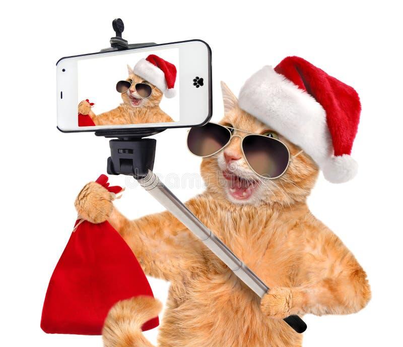 Katze im roten Weihnachtshut, der ein selfie zusammen mit einem Smartphone nimmt lizenzfreie stockbilder