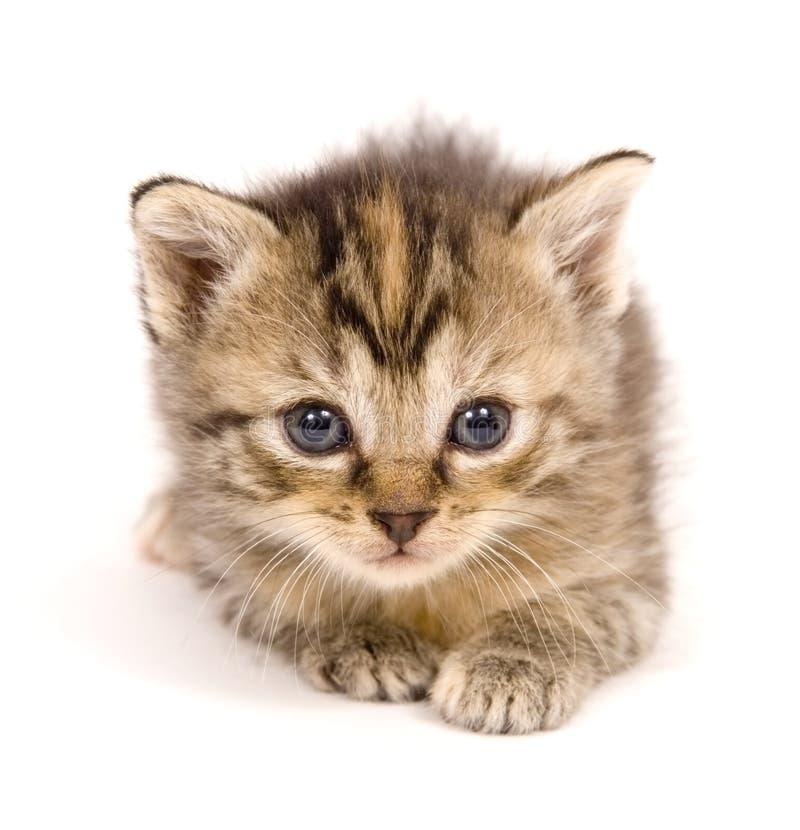 Katze im Ruhezustand auf weißem Hintergrund stockbilder