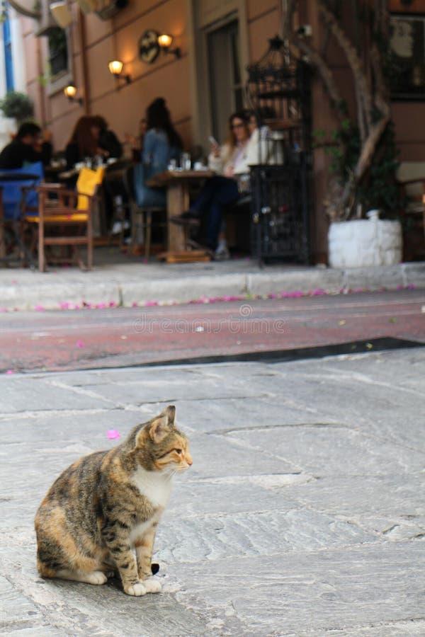 Katze im schmalen Weg von Plaka, Athen lizenzfreie stockfotos