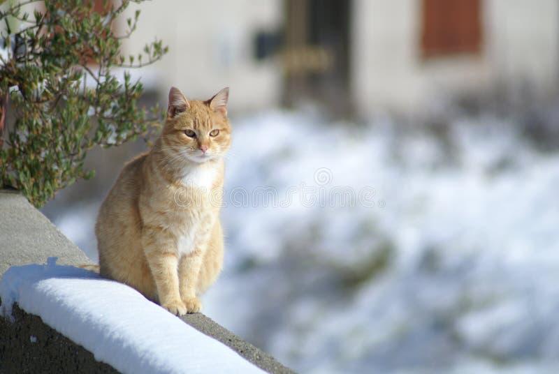 Katze im Schnee stockfoto