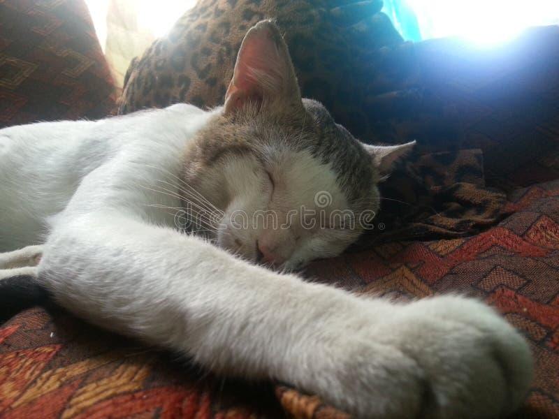 Katze im tiefen Schlaf lizenzfreie stockfotografie