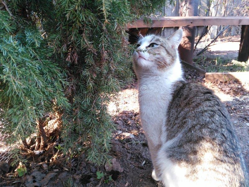 Katze im Wald nahe dem Baum stockfotografie