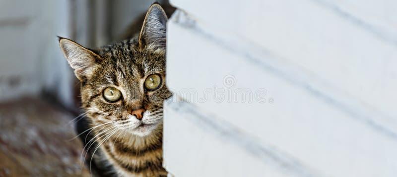 Katze, inländisches Haustier, Tier, spielerisch, inländisch, Zucht, weiblich stockfotografie