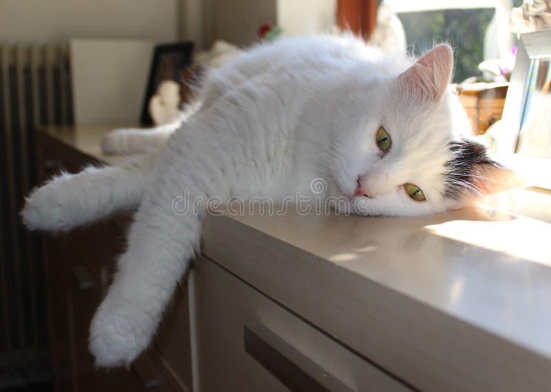 Katze ist entspannend lizenzfreies stockbild