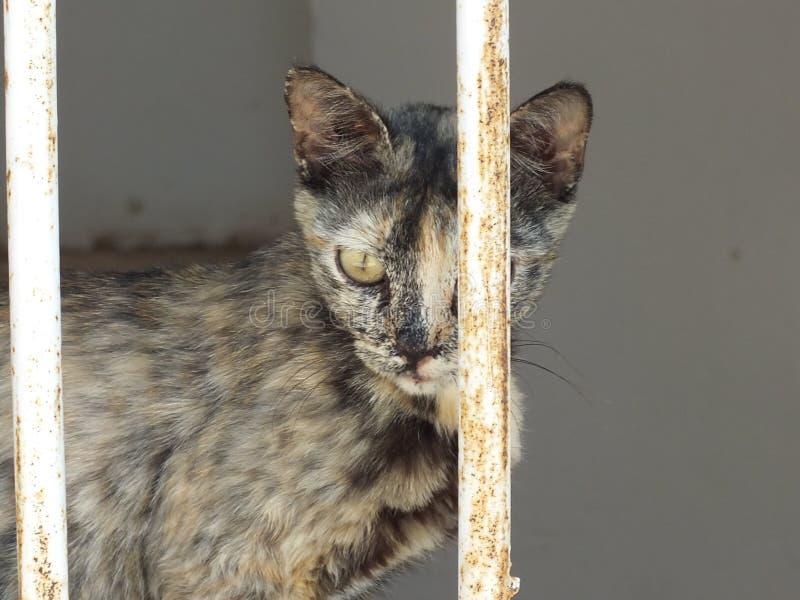 Katze in Jericho lizenzfreie stockfotografie