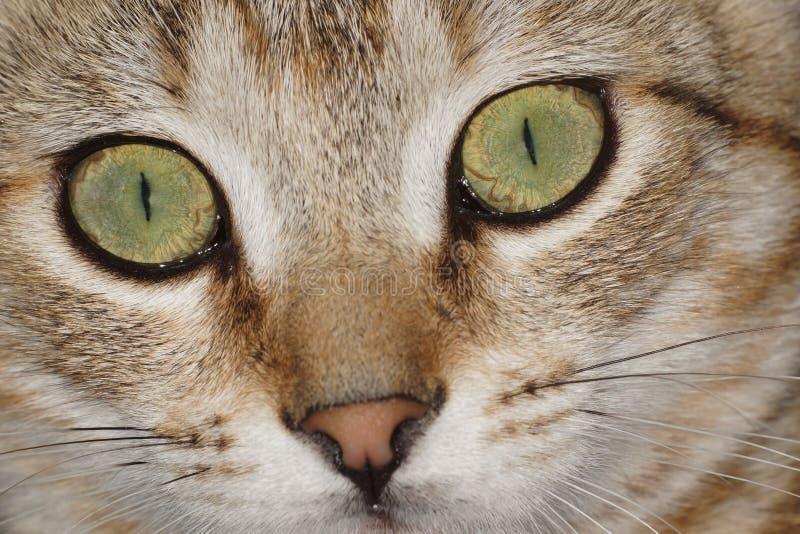 Katze, Katzen, Miezekatze stockfoto