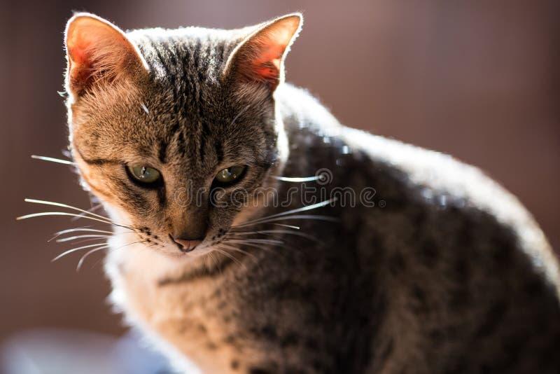Katze, kleine Katzen A, paart Katzen lizenzfreie stockfotografie