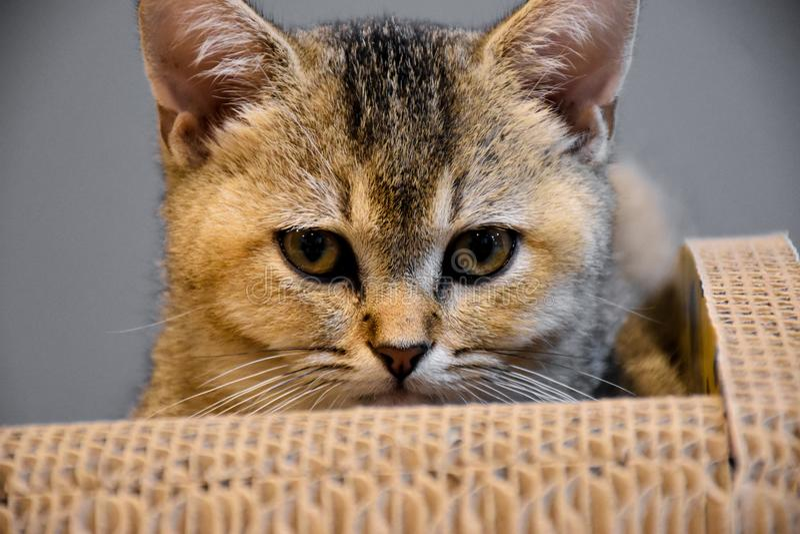 Katze legen nieder stockbild