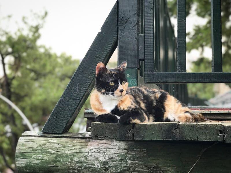 Katze liegt auf einem hölzernen Treppenhaus lizenzfreies stockfoto