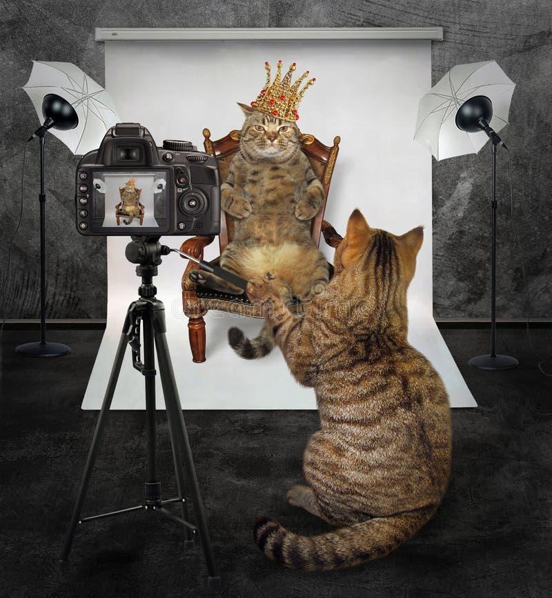 Katze macht ein Foto vom König lizenzfreie stockfotos