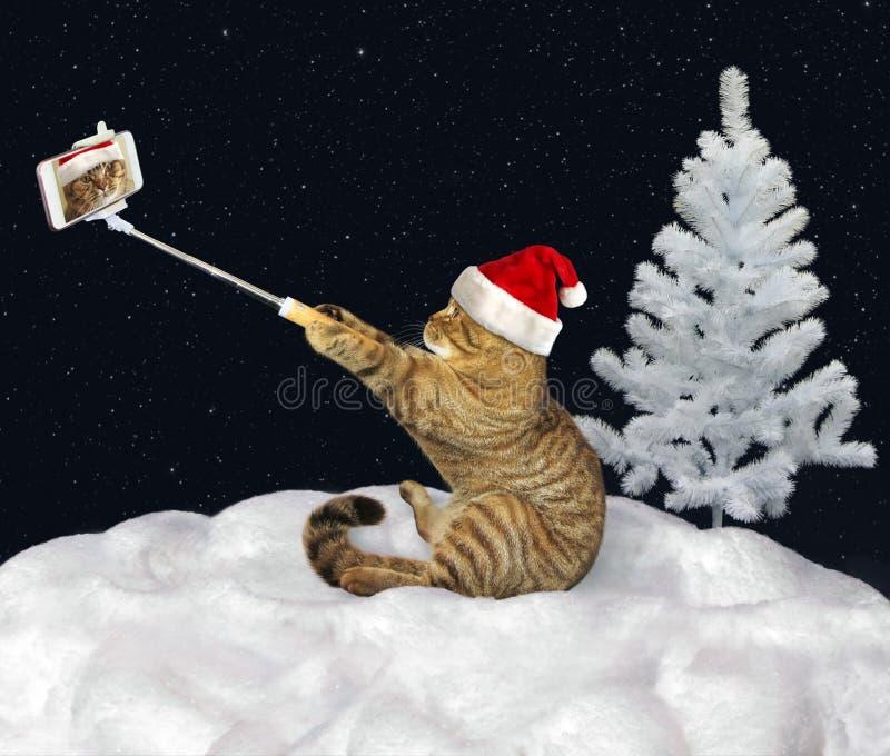 Katze macht selfie auf Schnee stockfotografie