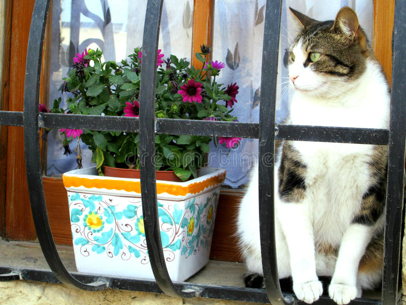 Katze in Malta im Fenster lizenzfreies stockbild