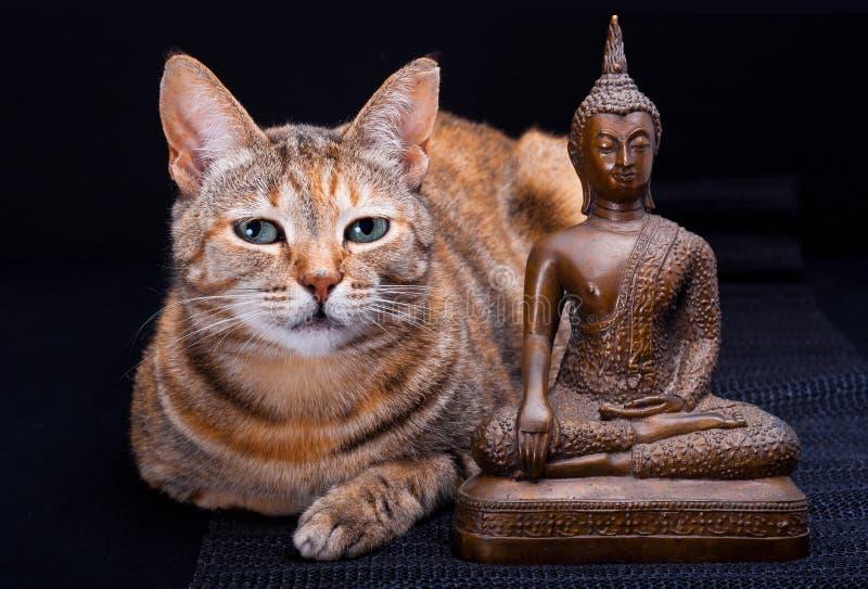 Katze-Meditation stockfotografie