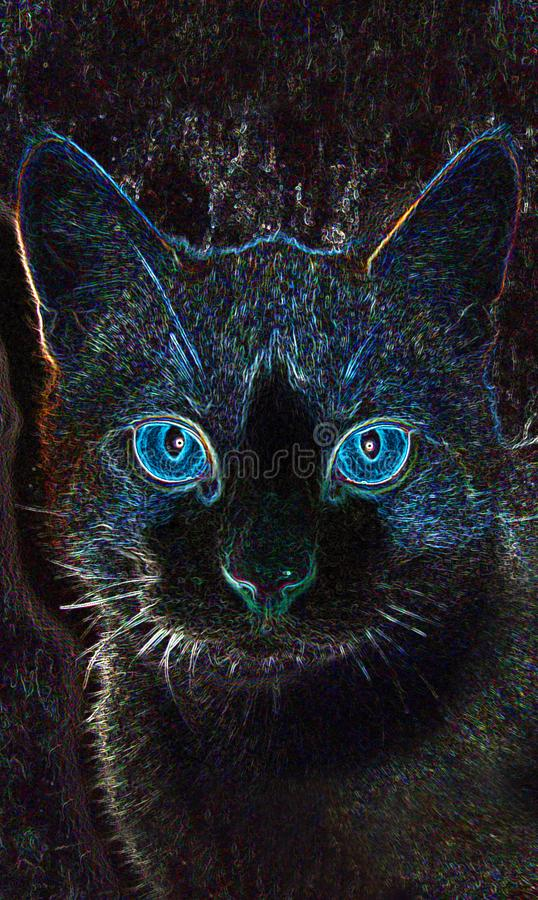 Katze mit blauen Augen nachts stockfotografie