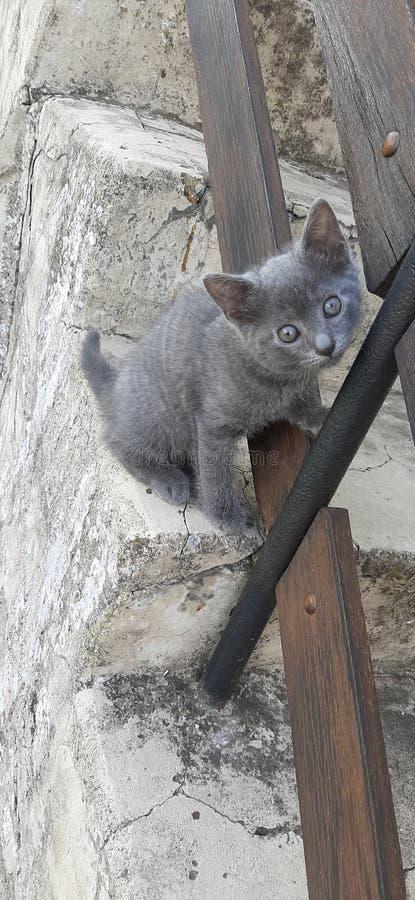 Katze mit den blauen Augen sehr selten lizenzfreie stockfotografie
