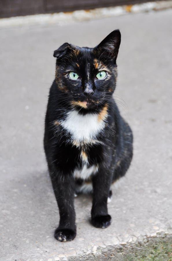 Katze mit einem Ohr lizenzfreies stockfoto
