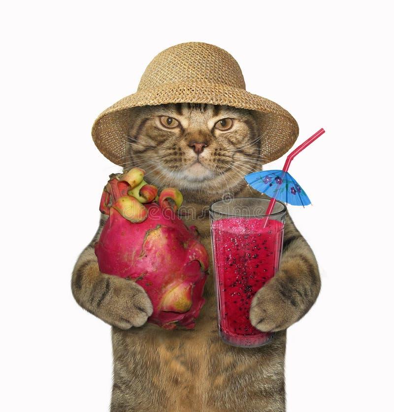 Katze mit einem pitaya und einem Saft stockfoto