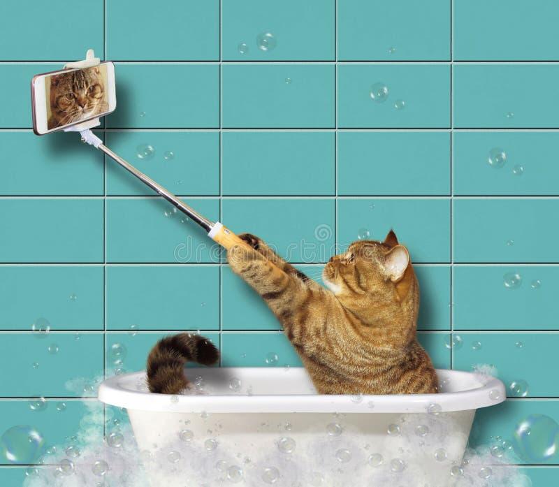 Katze mit einem Telefon in einem Badezimmer stockbild