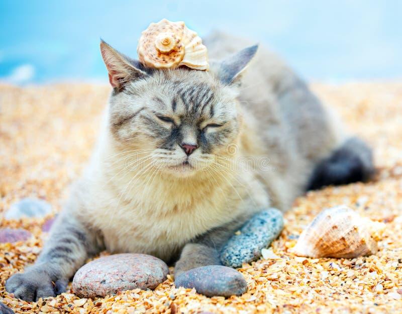 Katze Mit Einer Muschel Auf Dem Kopf Stockbild - Bild von