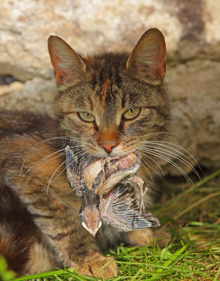 Katze mit einer Schwalbe stockbild