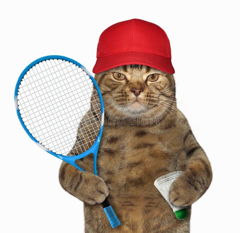 Katze mit Federballschläger lizenzfreies stockbild