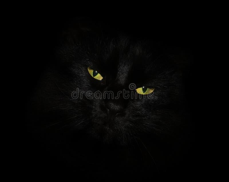 Katze mit gelben Augen lizenzfreies stockbild