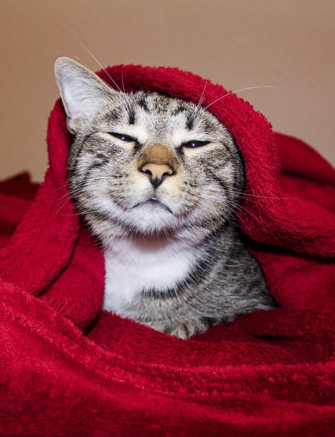 Katze mit grünen Augen liegen unter der roten Decke lizenzfreie stockfotografie