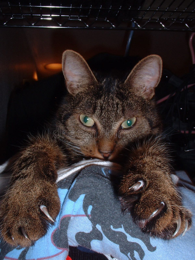 Katze mit Greifern 2 stockfotos