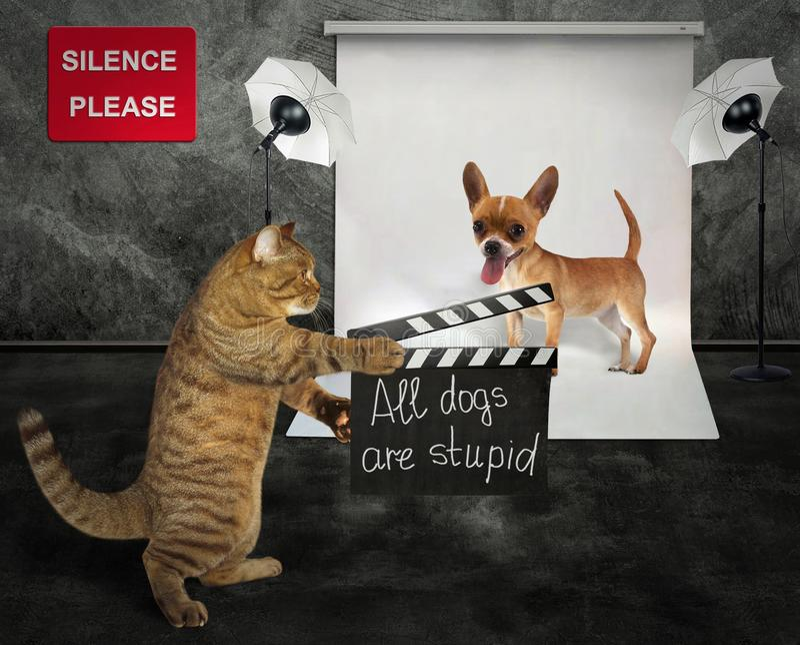 Katze mit Hund im Studio stockfotos