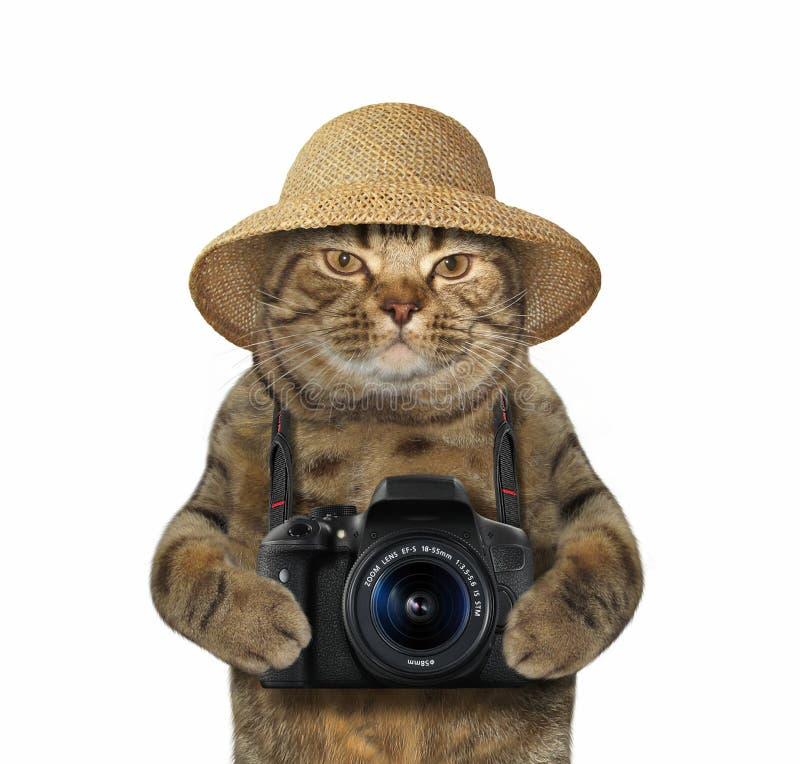 Katze mit Kamera 2 stockbild