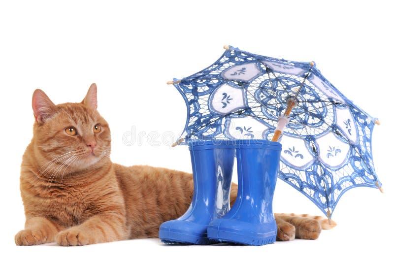 Katze mit Matten und Regenschirm lizenzfreie stockfotos
