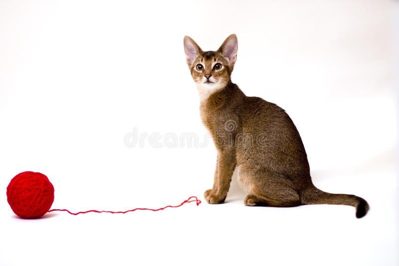 Katze mit Schlaufe lizenzfreie stockbilder