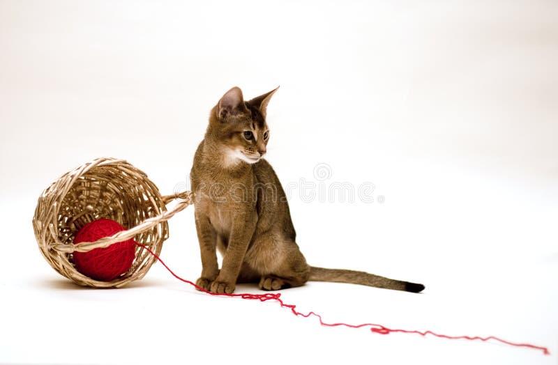 Katze mit Schlaufe und Korb lizenzfreies stockbild