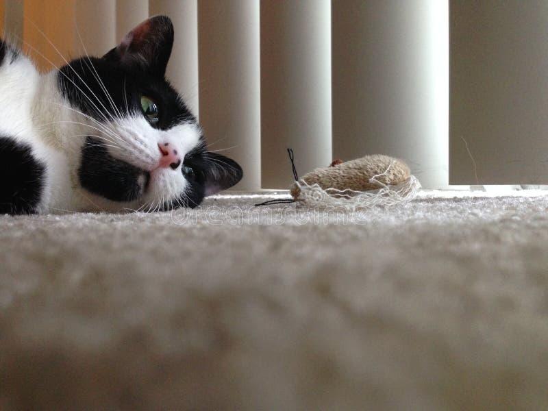 Katze mit Spielzeug lizenzfreies stockfoto