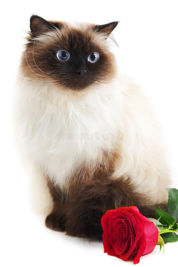 Katze mit stieg stockfoto