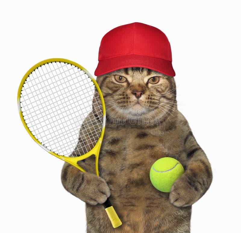 Katze mit Tennisschläger lizenzfreie stockfotos