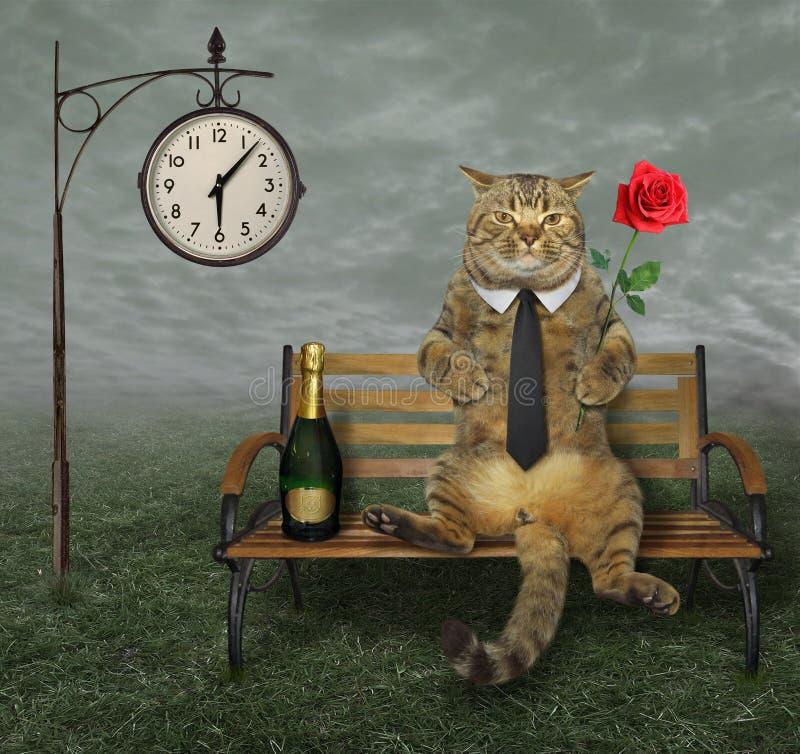 Katze mit Wein auf Bank lizenzfreie abbildung