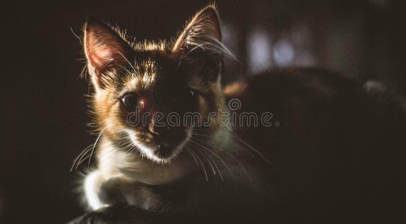 Katze morgens überrascht am Sonnenlicht stockbild