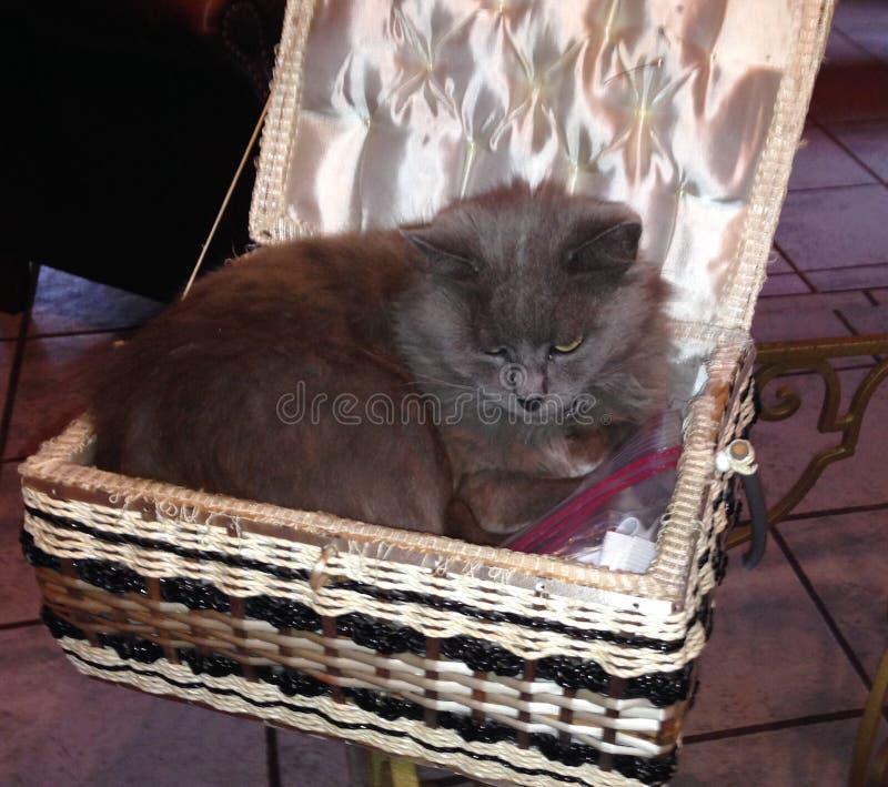 Katze in nähendem Kasten stockfotos