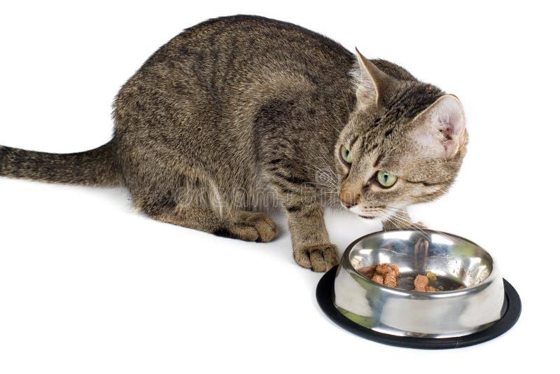 Katze nachdem dem Essen stockbild