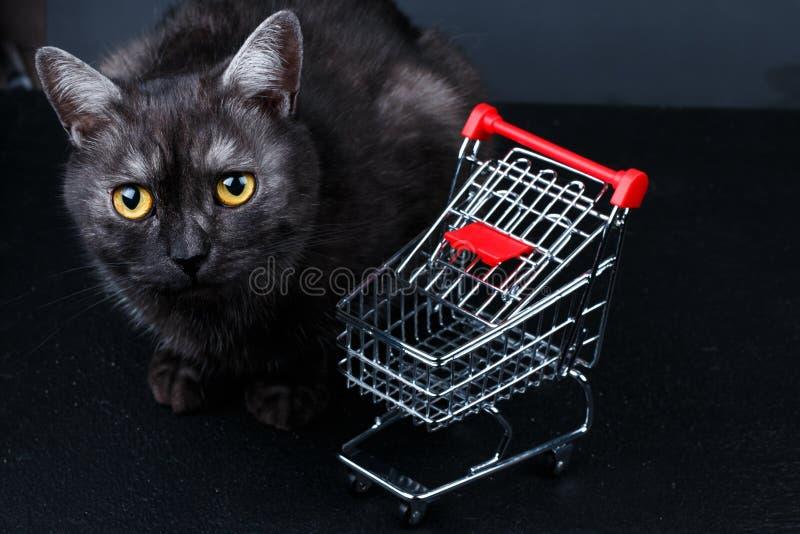 Katze nahe leerem Einkaufskorb stockfoto