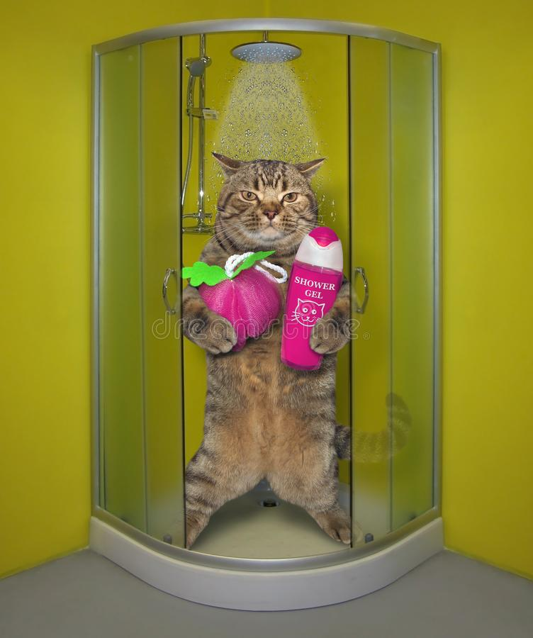 Katze nimmt eine Dusche lizenzfreie stockfotografie