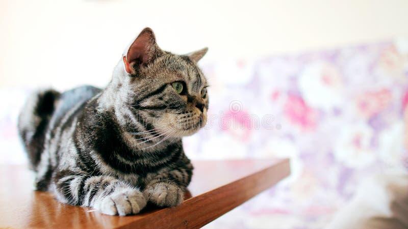 [Katze] Patrouille 12-02 lizenzfreies stockfoto