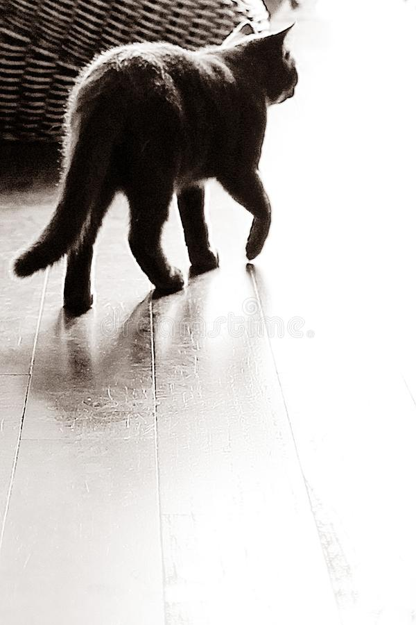 [Katze] Patrouille 12-01 lizenzfreie stockfotos